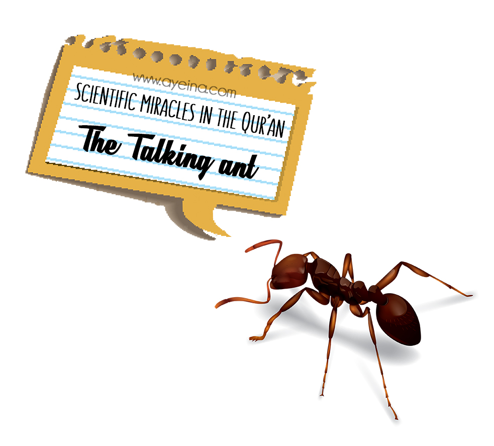 do ants talk? sulaiman (as) ability to talk to and understand animals ant's conversation with the prophet